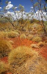 Tom Price  Australien  Farben des australischen Outbacks