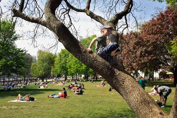 Berlin  Deutschland  Junge mit Kappe sitzt im Baum im Monbijoupark