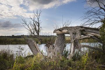 Flusslauf der Oder im Nationalpark Unteres Odertal