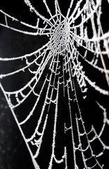Raureif auf Spinnennetz