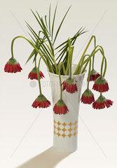 Vertrockneter Blumenstrauss  Gerbera