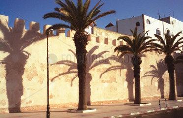 Essaouira Palmen