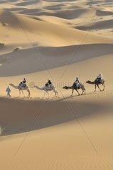 Kameltrekking  Erg Chebbi  Marokko  Afrika