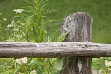 Holzzaundetail inmitten einer gruenen saftigen Wiese