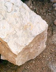 Fossil in einem Stein