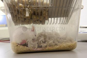 Kaefig mit Maus in Tierversuchslabor