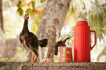 Huhn auf gedecktem Tisch