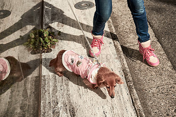 Japanischer Fashion-Hund