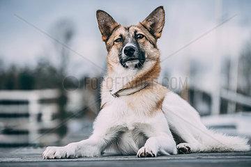 Aufmerksamer Mischlingshund