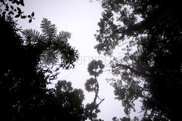 Ecuador  Reserva Bellavista Cloud Forest