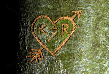 Herz  in einen Baum geritzt  Symbol Verliebte