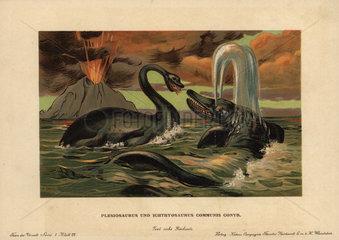 Plesiosaurus  extinct aquatic carnivore  and ichthyosaurus communis  extinct nektonic carnivore of the Jurassic.