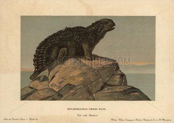 Hylaeosaurus  extinct genus of herbivore from the Cretaceous.