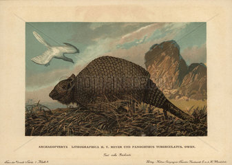 Archaeopteryx lithographica and Glyptodont  Panochthus tuberculatus Owen