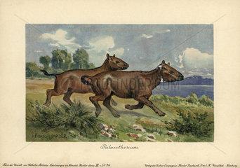 Palaeotherium  extinct genus of primitive horse-like perissodactyl ungulate.