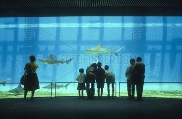 Italy  Liguria  Aquarium of Genoa  people looking at sharks