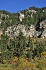 USA  South Dakota  Black Hills National Forest  Spearfish Canyon