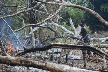 Abholzung von Regenwald und Brandrodung