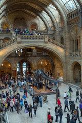 London  Grossbritannien  Natural History Museum