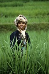 Asia  Indonesia  Java  rice-field