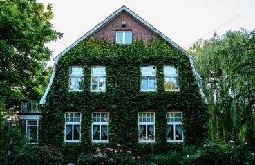 Leer  Deutschland  mit Efeu bewachsenes Wohnhaus