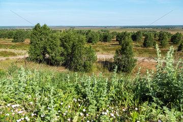 Gardelegen  Deutschland  Truppenuebungsplatz Altmark in der Colbitz-Letzlinger Heide