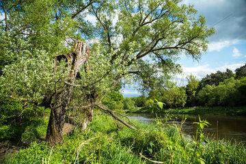 Starczanowo  Polen  Flusslandschaft an der Warthe