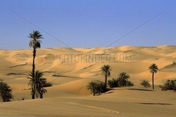 Libya  Sahara desert at Mandara oasis