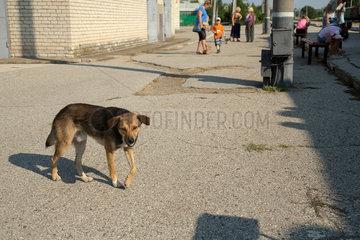 Bender  Republik Moldau  klaeffender Hund am Bahnsteig
