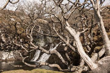 Tobermory  Grossbritannien  Landschaft auf der Isle of Mull in Schottland
