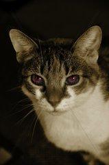 devilspussycat