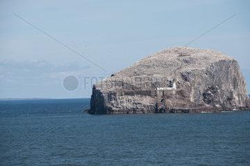 North Berwick  Grossbritannien  Blick auf den Bass Rock