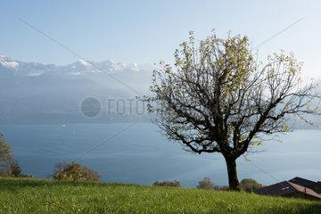 Sigriswil  Schweiz  Blick ueber den Thunersee