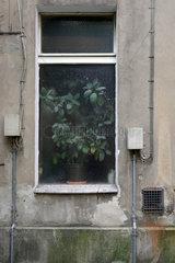 Berlin  Deutschland  Hinterhoffenster eines Altbaus