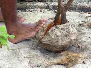 Oeffnen einer Kokosnuss