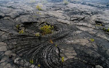 Farn in Lava