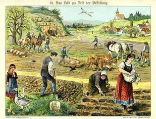 Felder bestellen  Illustration  1885