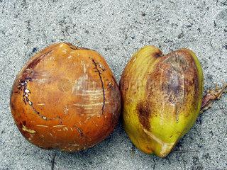 Kokosnussduett