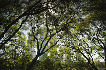 Trees in nature preserve  Buenos Aires  Argentina