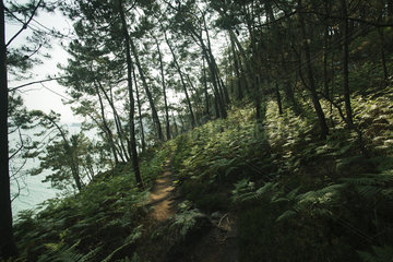 Wooded hillside  Crozon Peninsula  Finistère  Brittany  France