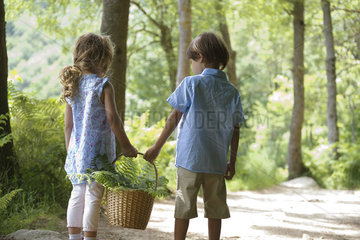 Children walking together in woods  carrying basket of fern fronds
