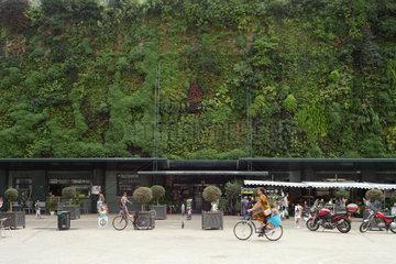 Avignon  Frankreich  bewachsene Hausfassade