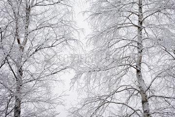 Lippen  Tschechien  eingeschneite Baumkronen am Stausee Lipno