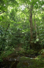 Pont Casse  Dominica  Dschungelweg Waitukubuli National Trail