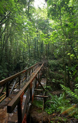 Pont Casse  Dominica  Brueckenbauwerk des Dschungelwegs Waitukubuli National Trail