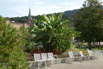Badenweiler  Deutschland  Palmen im Kurgarten