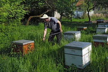 Berlin  Deutschland  Berufsimker maeht das hohe Gras bei seinen Bienenvoelkern mit einer Sense