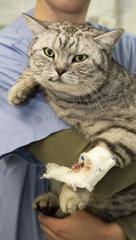 Behandlung von Kleintieren in Tierklinik