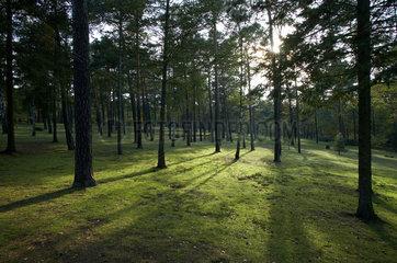 Halbe  Deutschland  Waldfriedhof