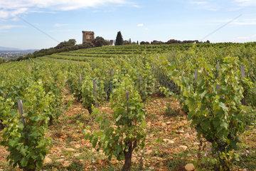 Chateauneuf-du-Pape  Frankreich  Weinreben im Weinanbaugebiet Chateauneuf-du-Pape